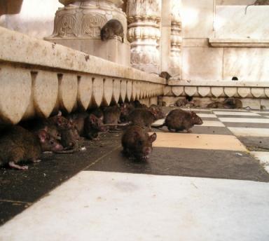 Photo Chauffeur Privé : Rajasthan et Taj Mahal des Mille et Une Nuits