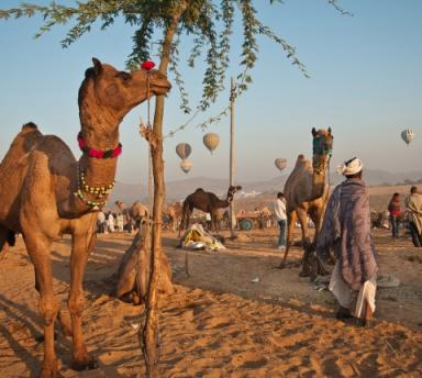 Photo La Foire Aux Chameaux de Pushkar, Circuit Organisé avec Chauffeur